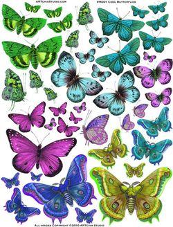 M301_CoolButterflies