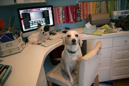 My pups3-