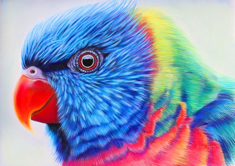 Rainbow_lorikeet_step-by-step_final