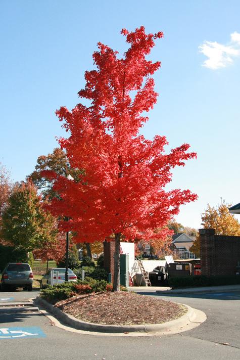 Beautiful_tree